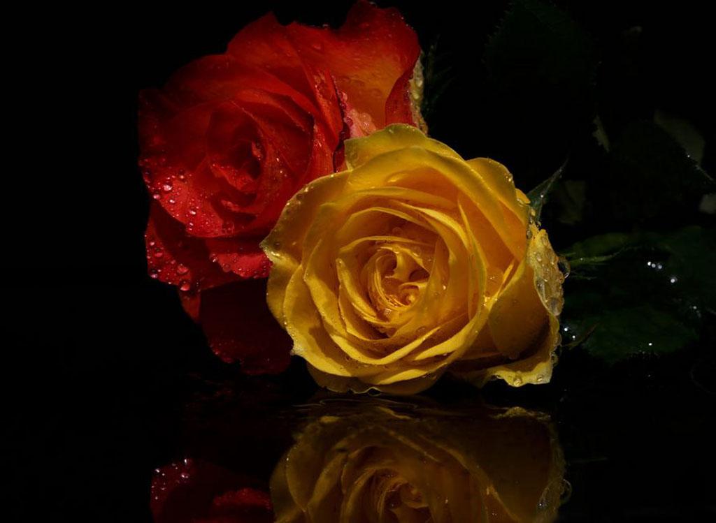 Almas-Bavcic-two-roses.jpg