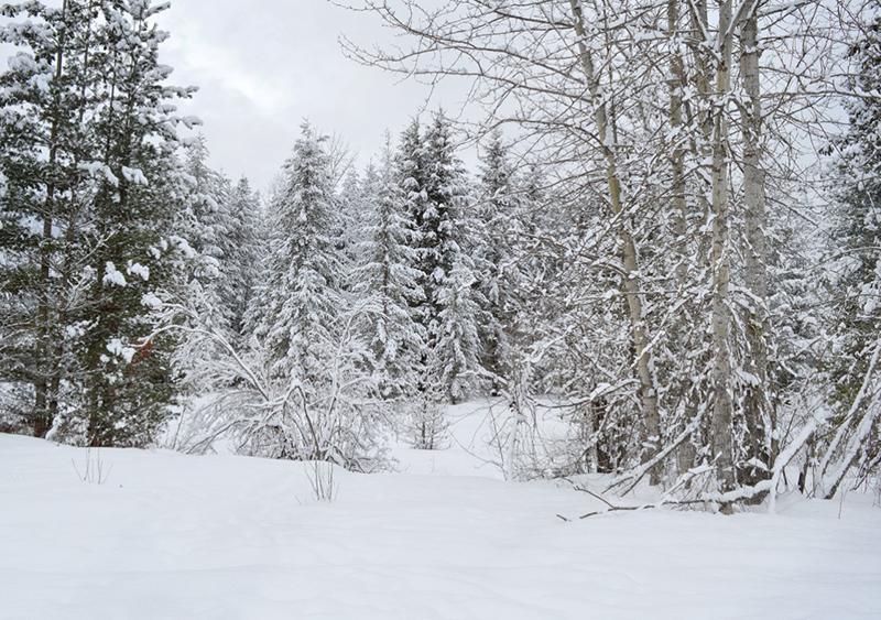 Outdoor-winter-scene.jpg