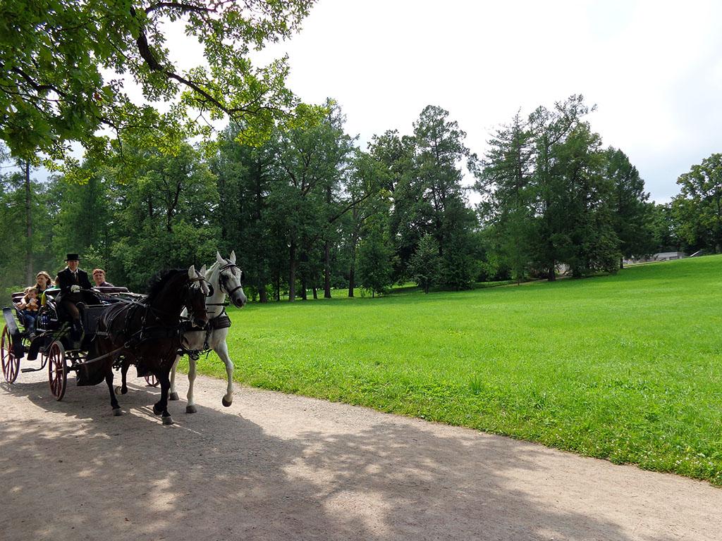 8 прогулка на лошадях