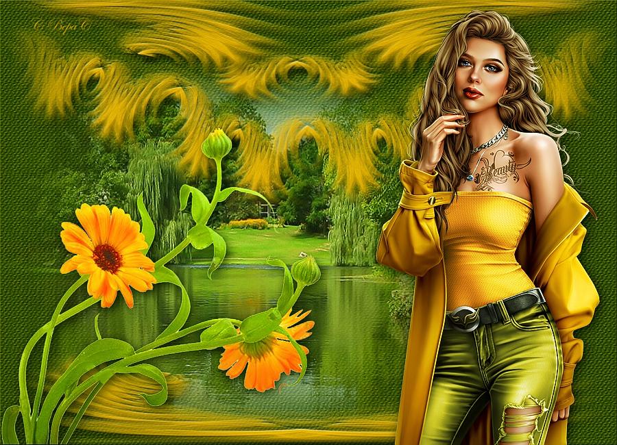 желтые ромашки