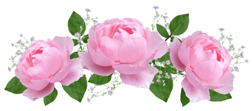 flower-3083088_1280.png