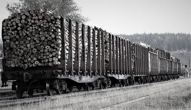 Вагоны с лесом. Фото из интернета.