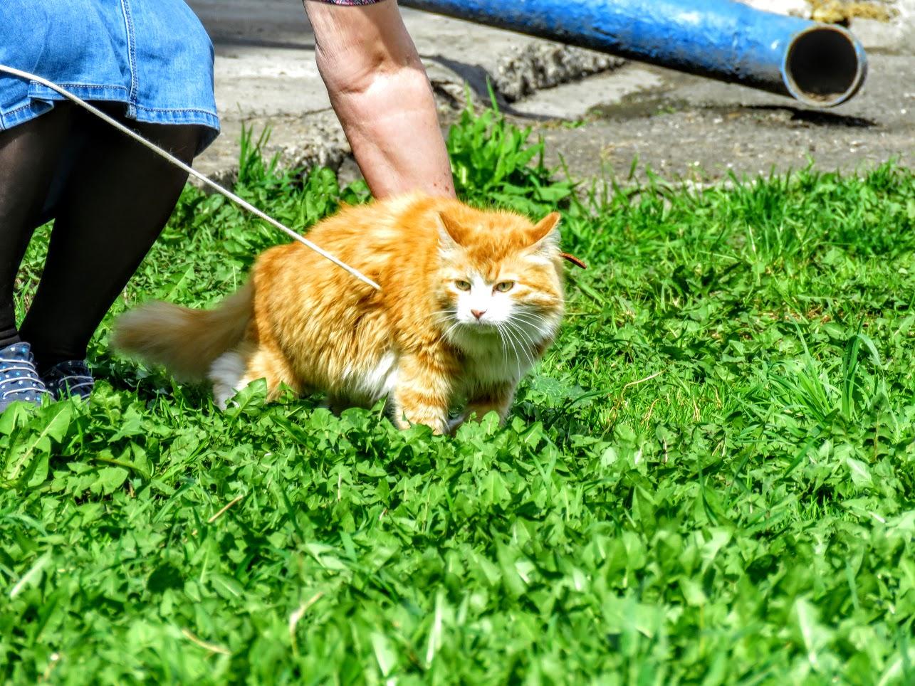 Фотоохота на чёрных коршунов. Рыжие котики и мороженое Сибирские голубые ели) IMG 9913