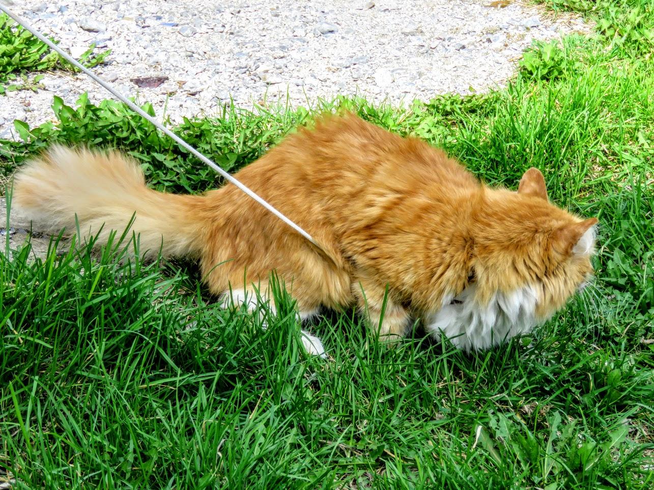 Фотоохота на чёрных коршунов. Рыжие котики и мороженое Сибирские голубые ели) IMG 9915
